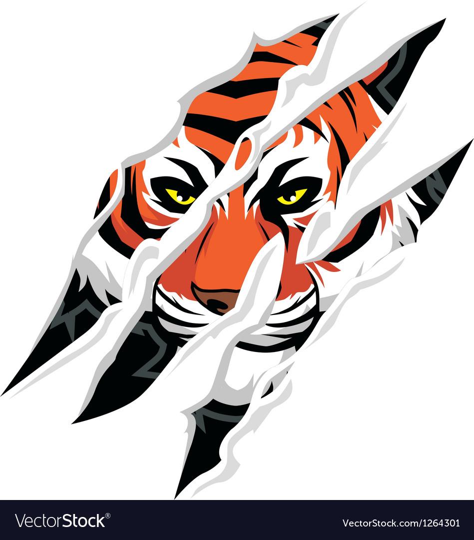 Tiger claw mark vectorimage