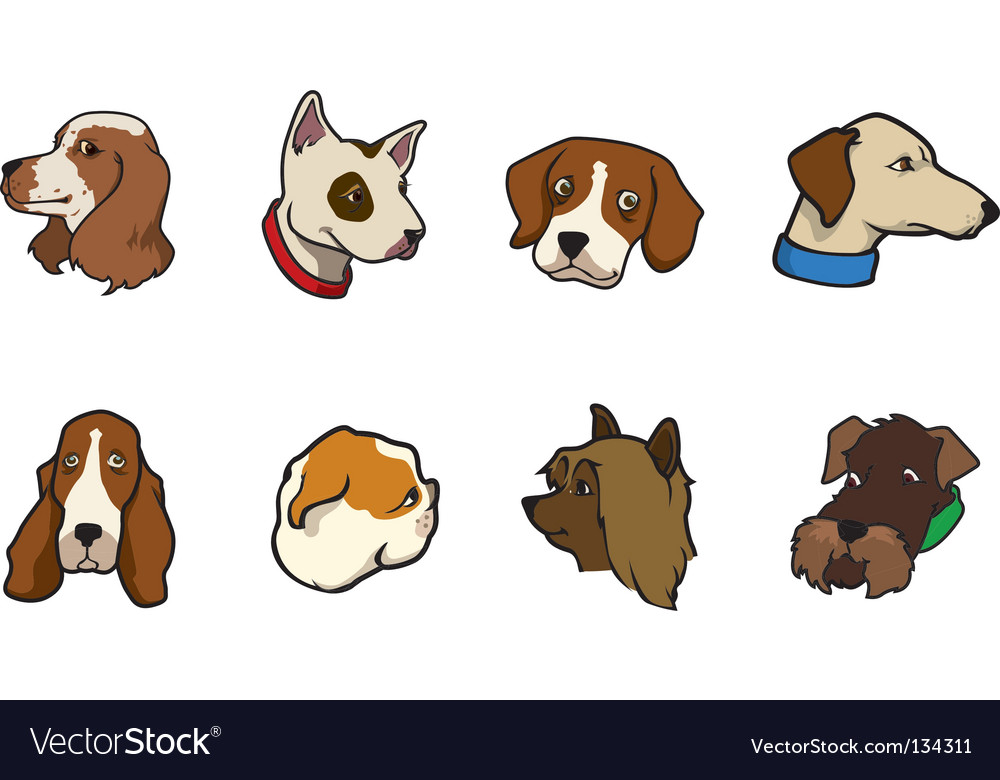 Dogs collection - heads