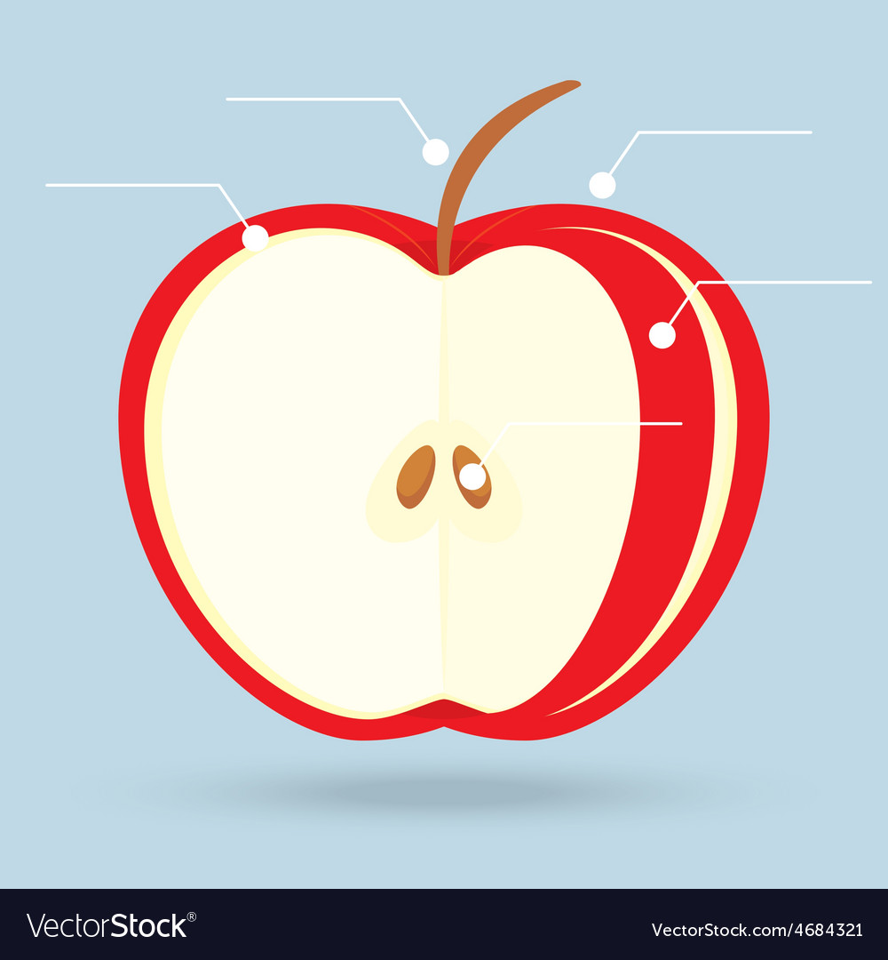 Apple slices structure diagram isolated on