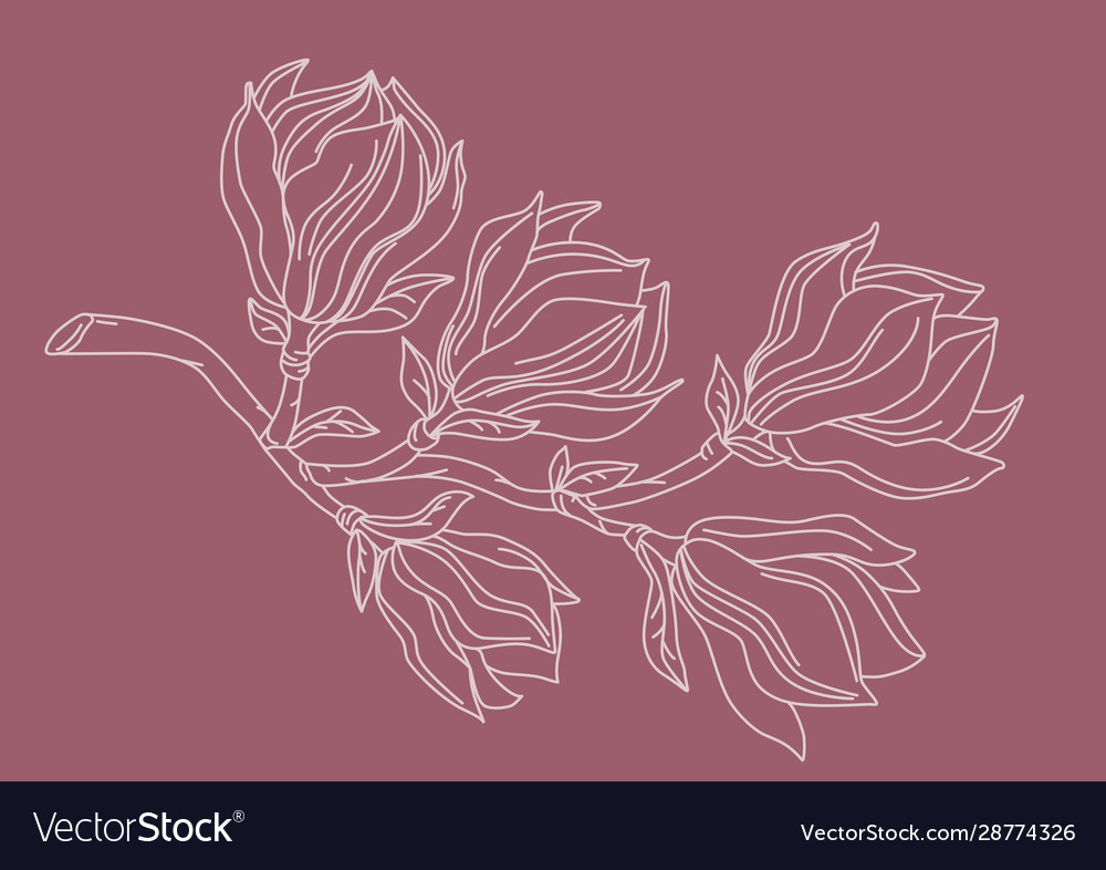 Magnolia branch drawing