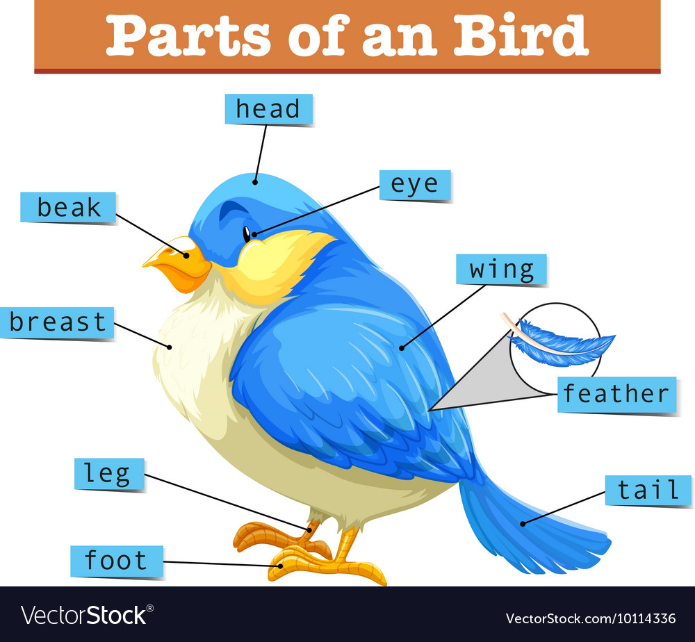 different parts of little blue bird royalty free vector