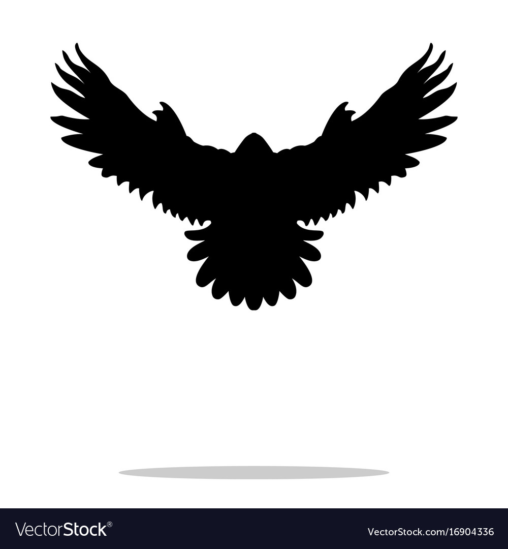 Falcon bird black silhouette animal
