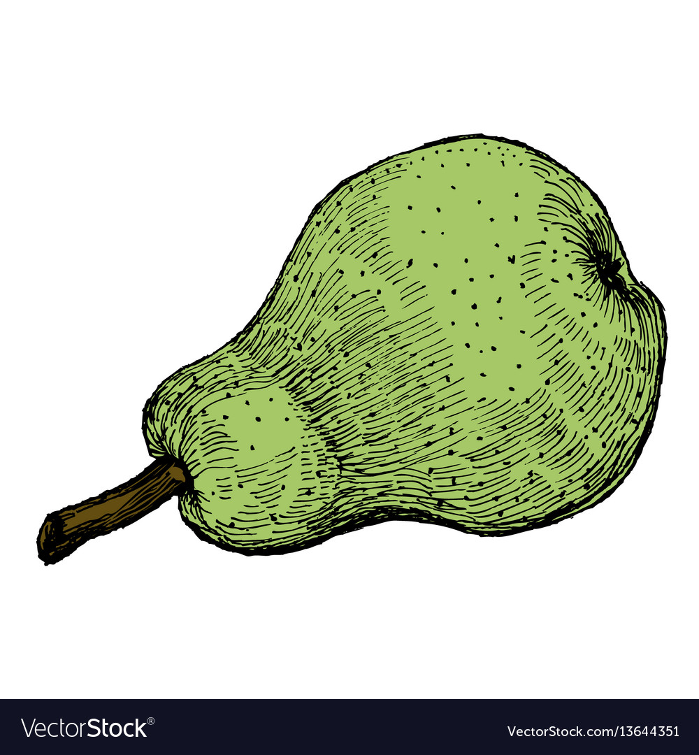 Colorful engraving of a green pear