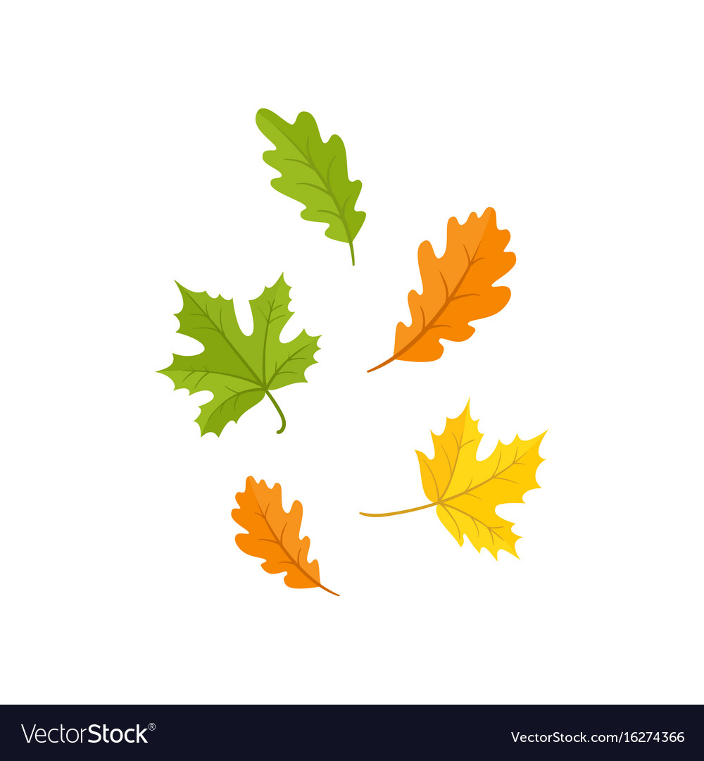 Colorful set of oak and maple fall autumn leaves