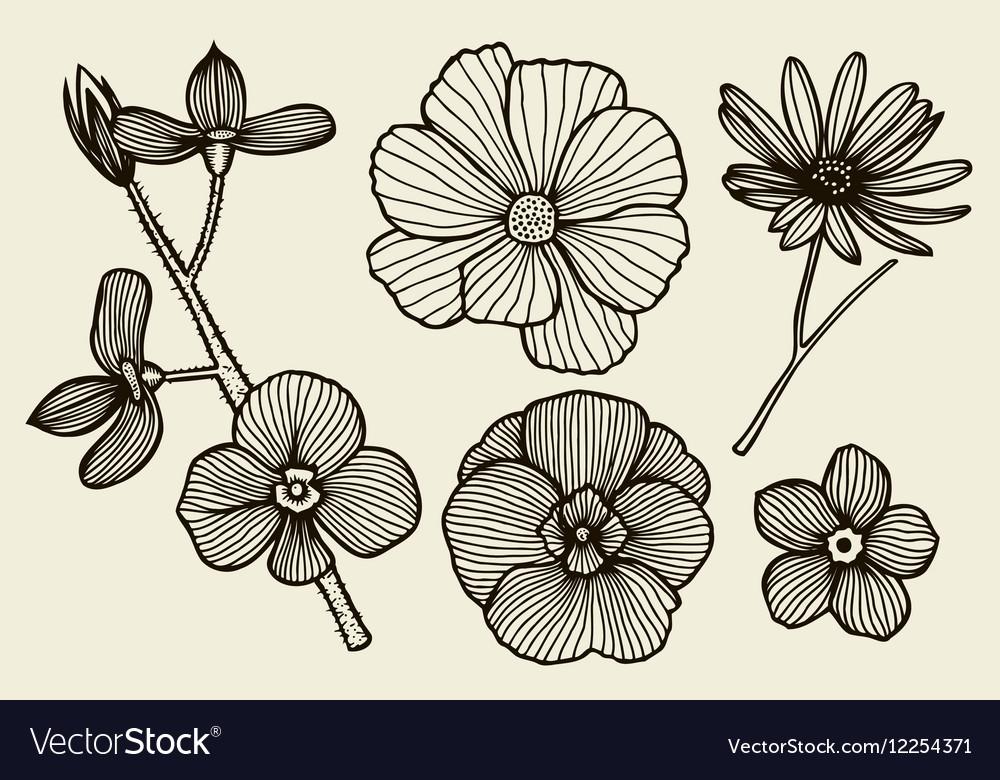 Hand drawn flowers