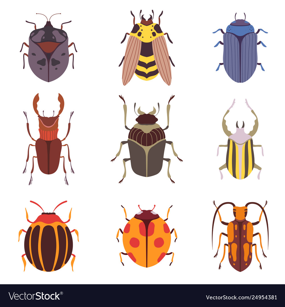 Collection various insects species bugs
