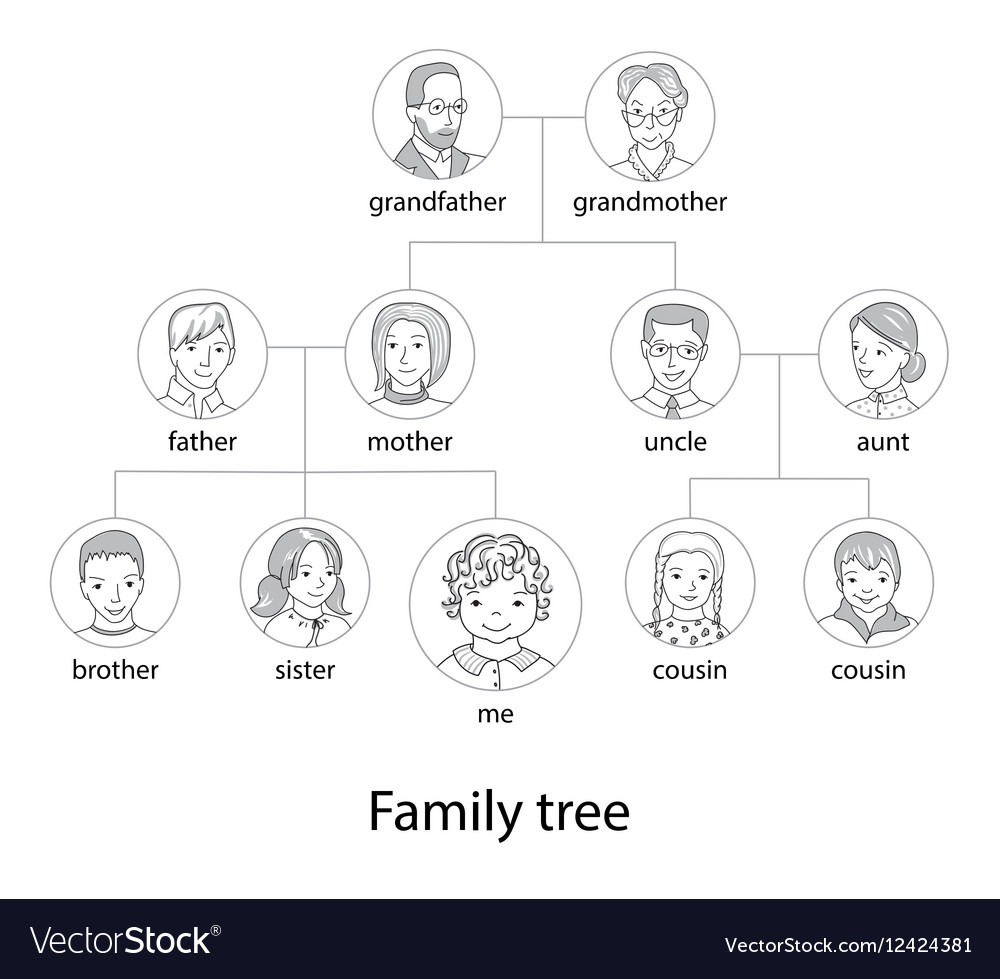 family tree chart thin line style vector image