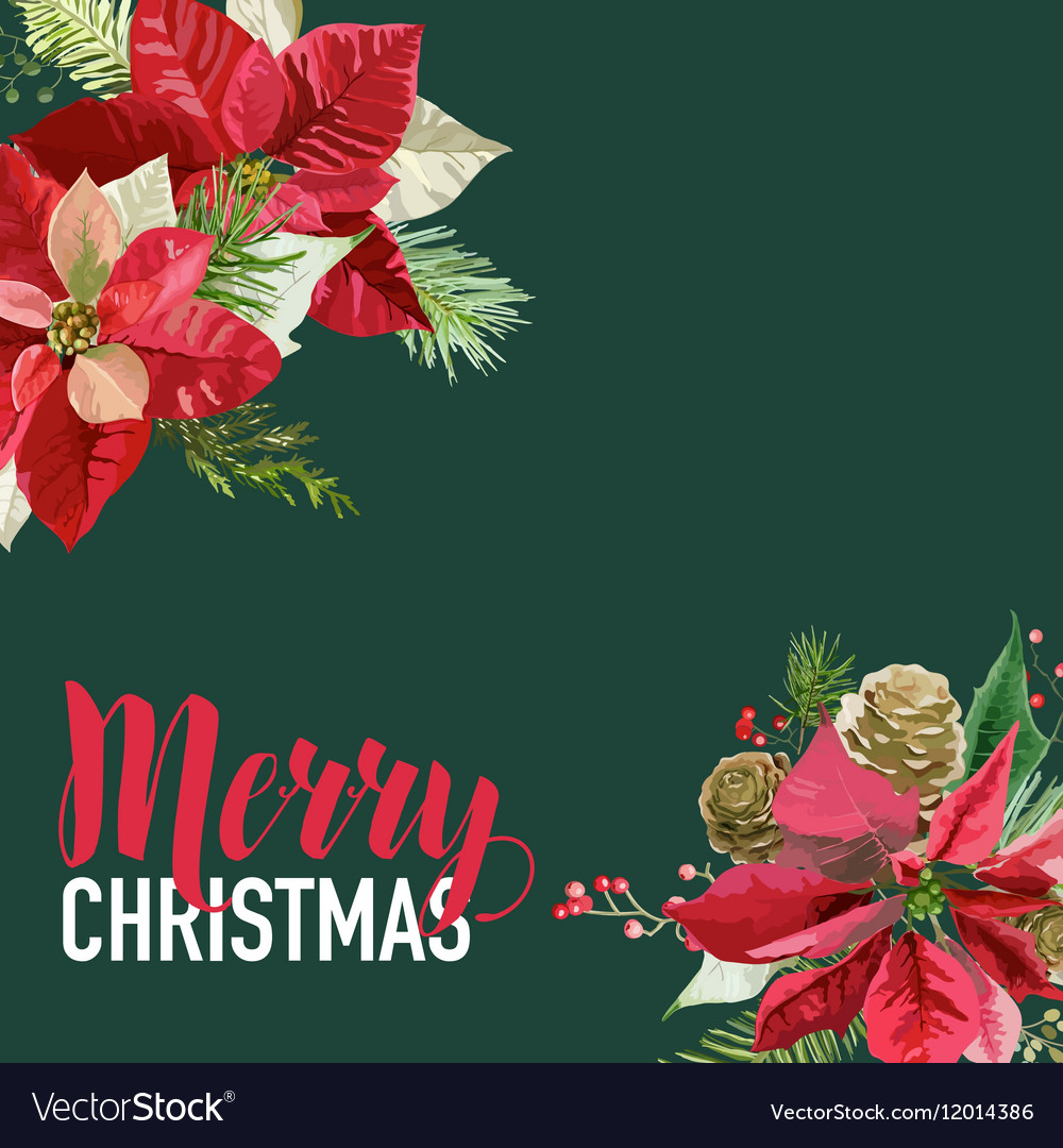 Christmas Poinsettia Flowers Graphic Design vector image