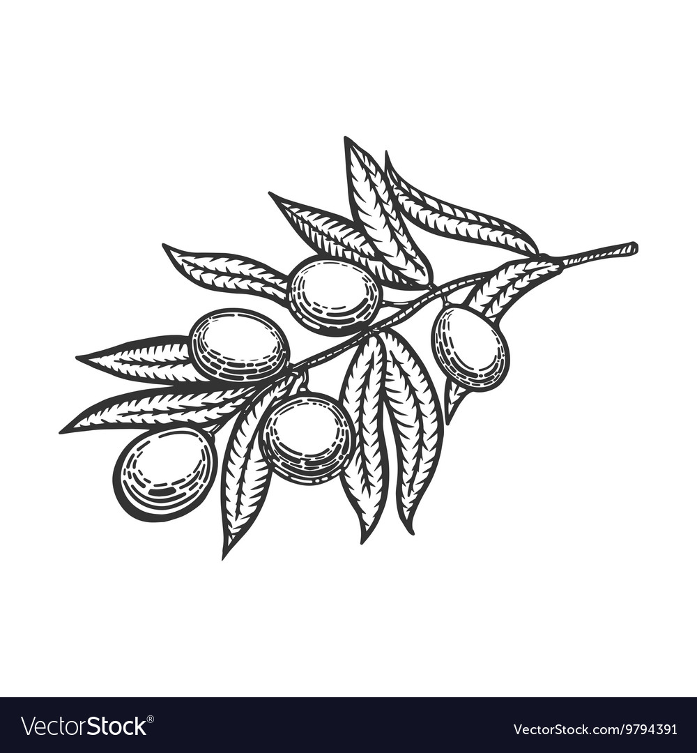 Olive branch engraving style