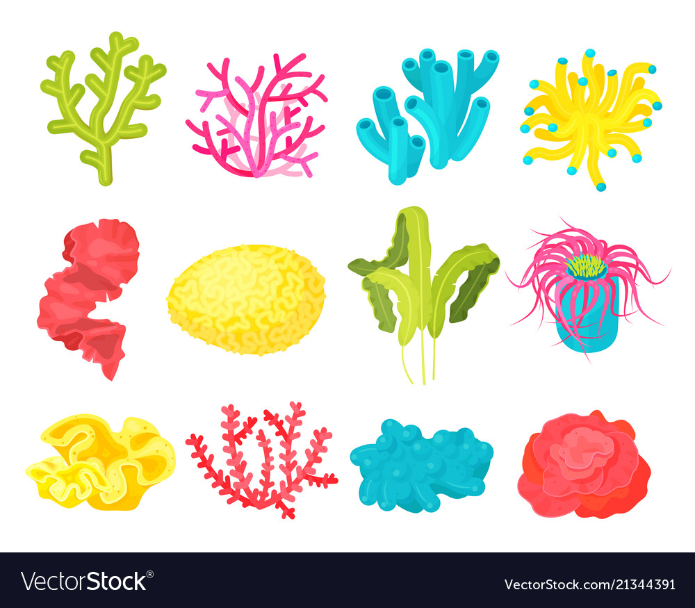 Seaweed and corals set