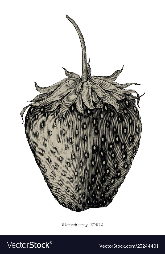 Strawberry hand drawing vintage engraving style