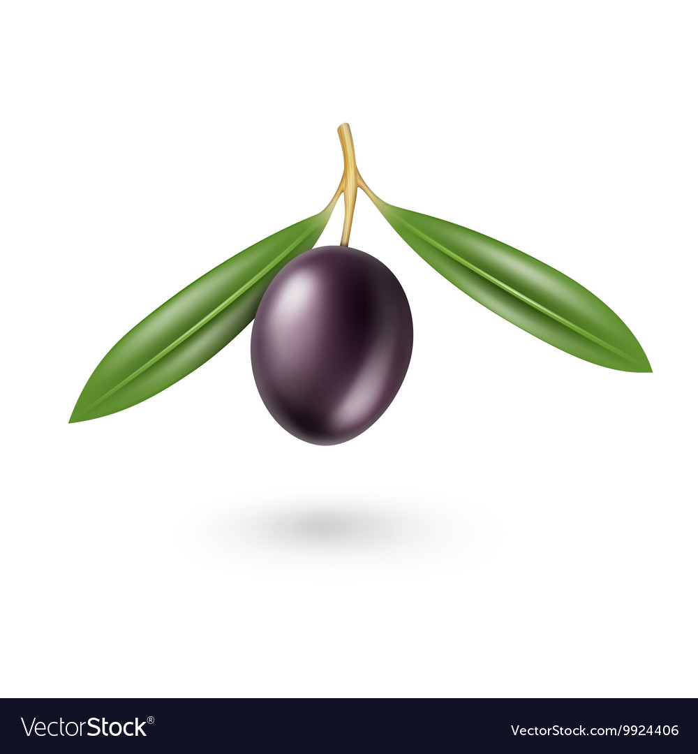 Black Olive with Leaves Isolated on White