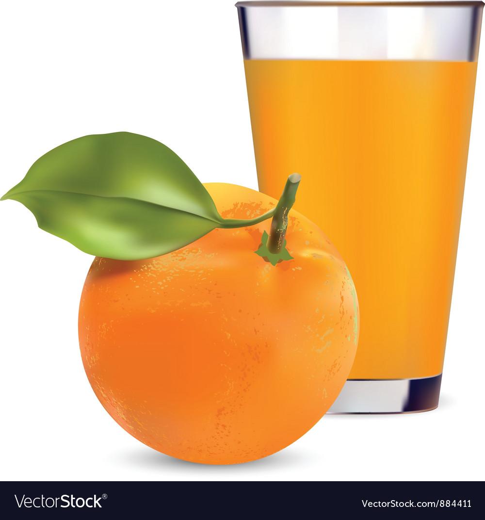 Orange Juice vector image
