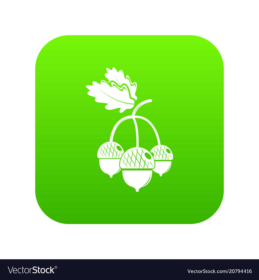 Acorn icon green vector image