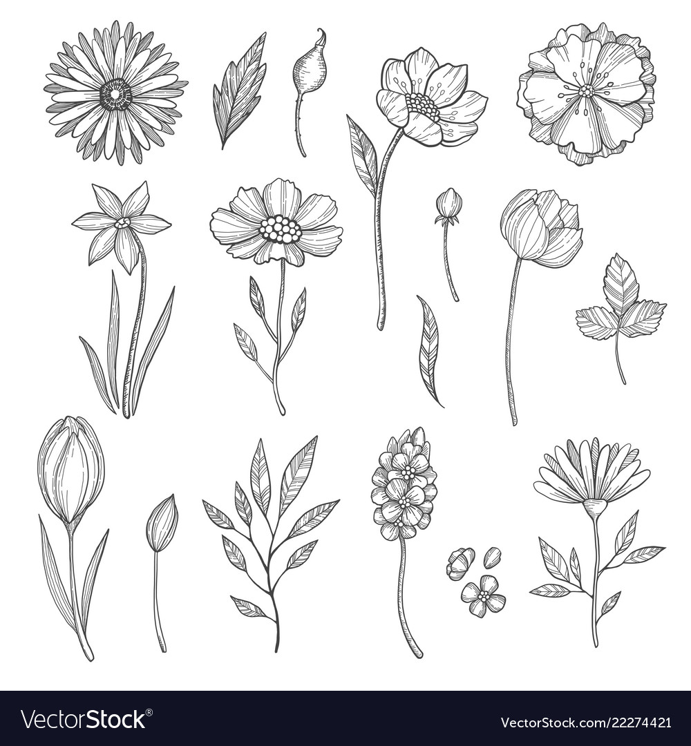 Hand drawn flowers various pictures of