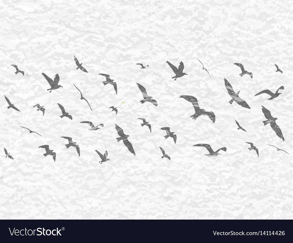Flying birds silhouettes on white grunge