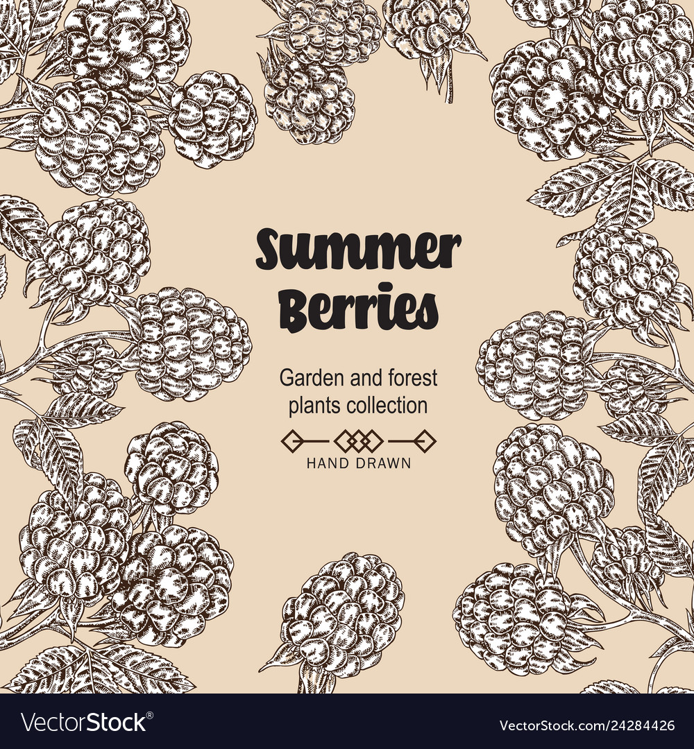 Hand drawn background with summer berries