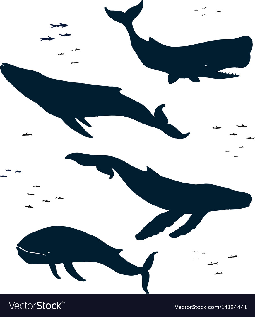 Marine mammals silhouette