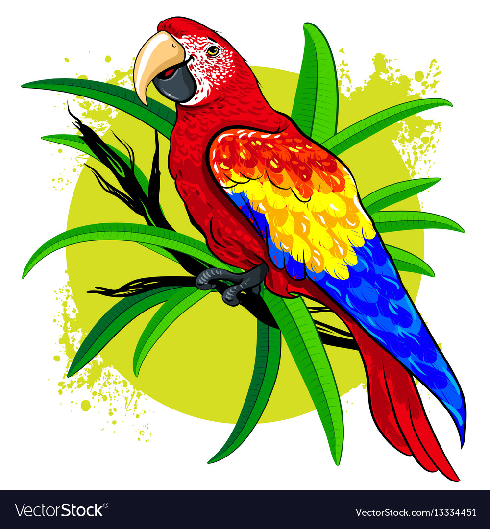Drawing of a large bright colored parrot on