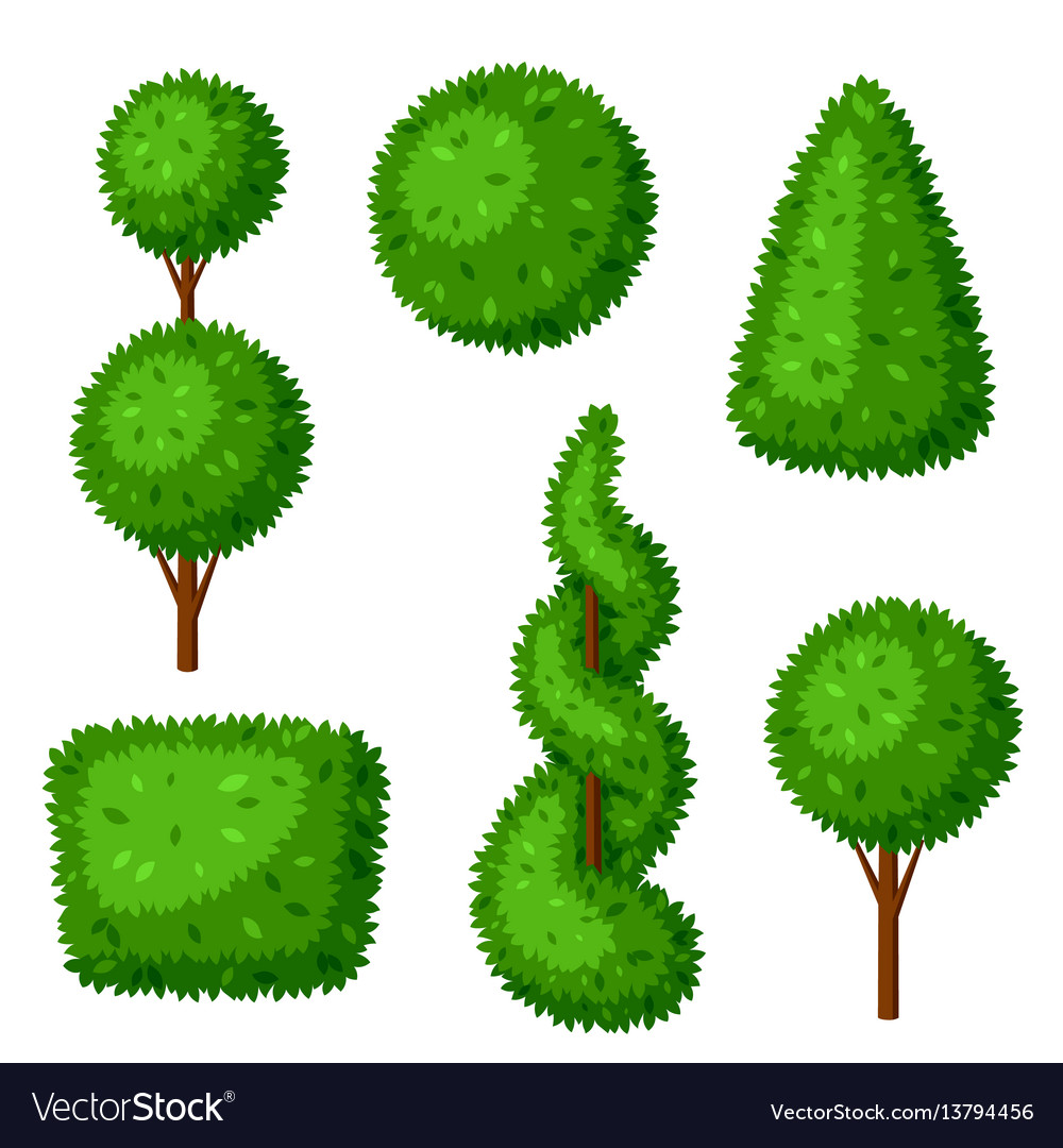 Boxwood Topiary Garden Plants Set Decorative Vector Image