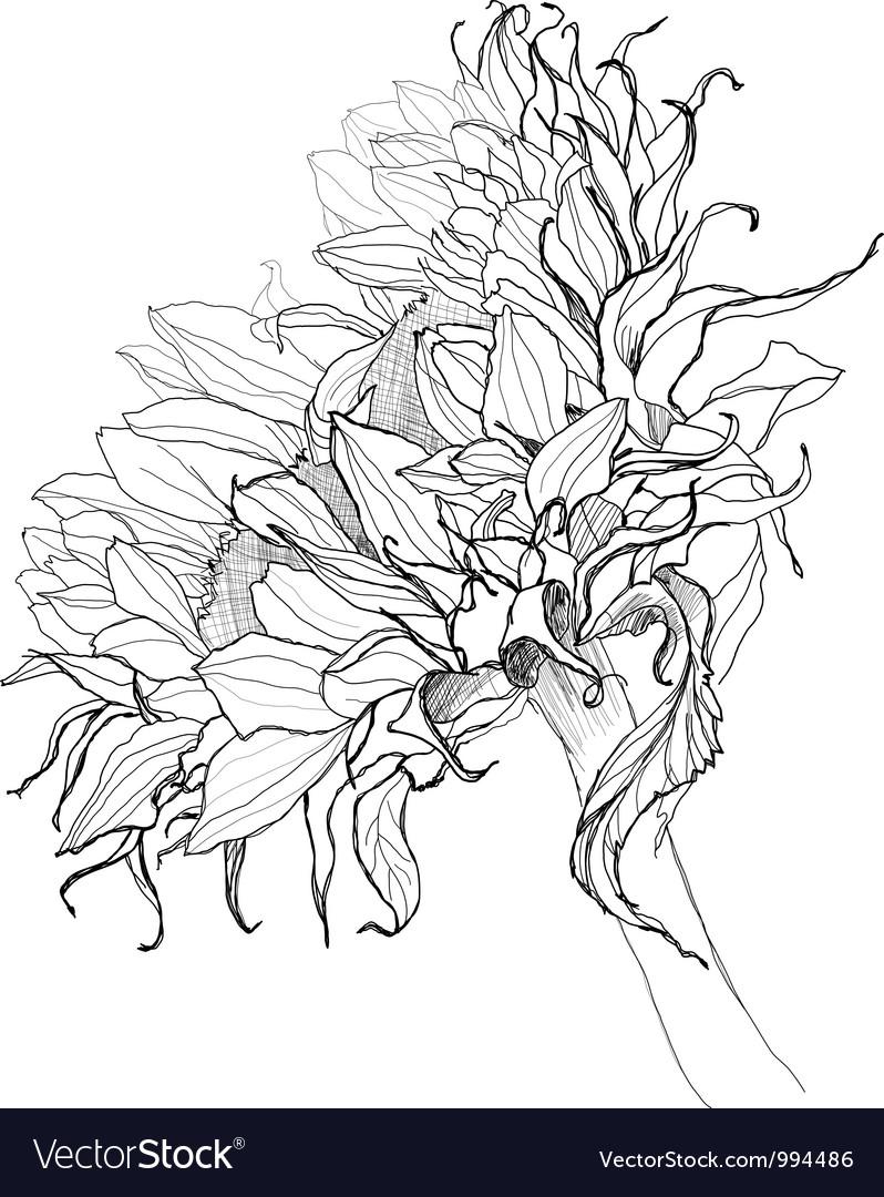 Sunflower pen drawing