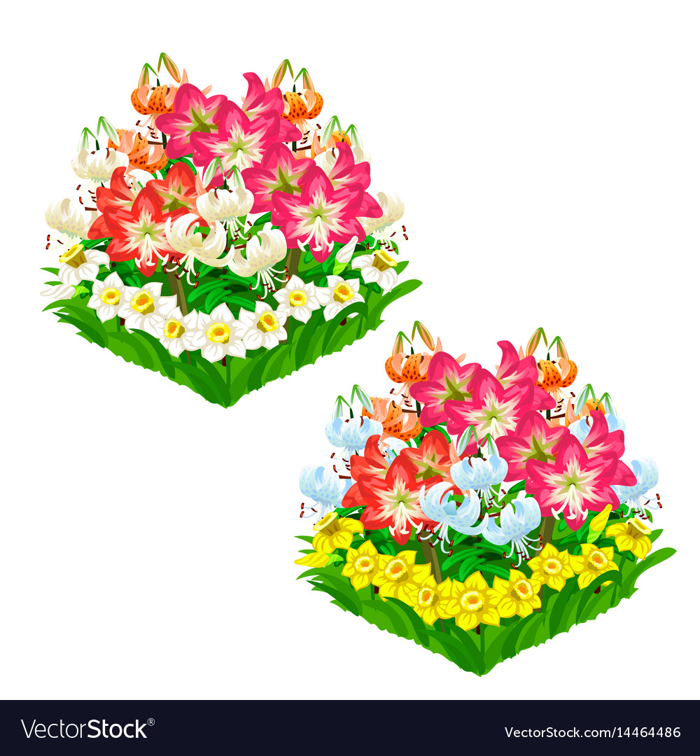 Two Beautiful Flower Beds Isolated Royalty Free Vector Image