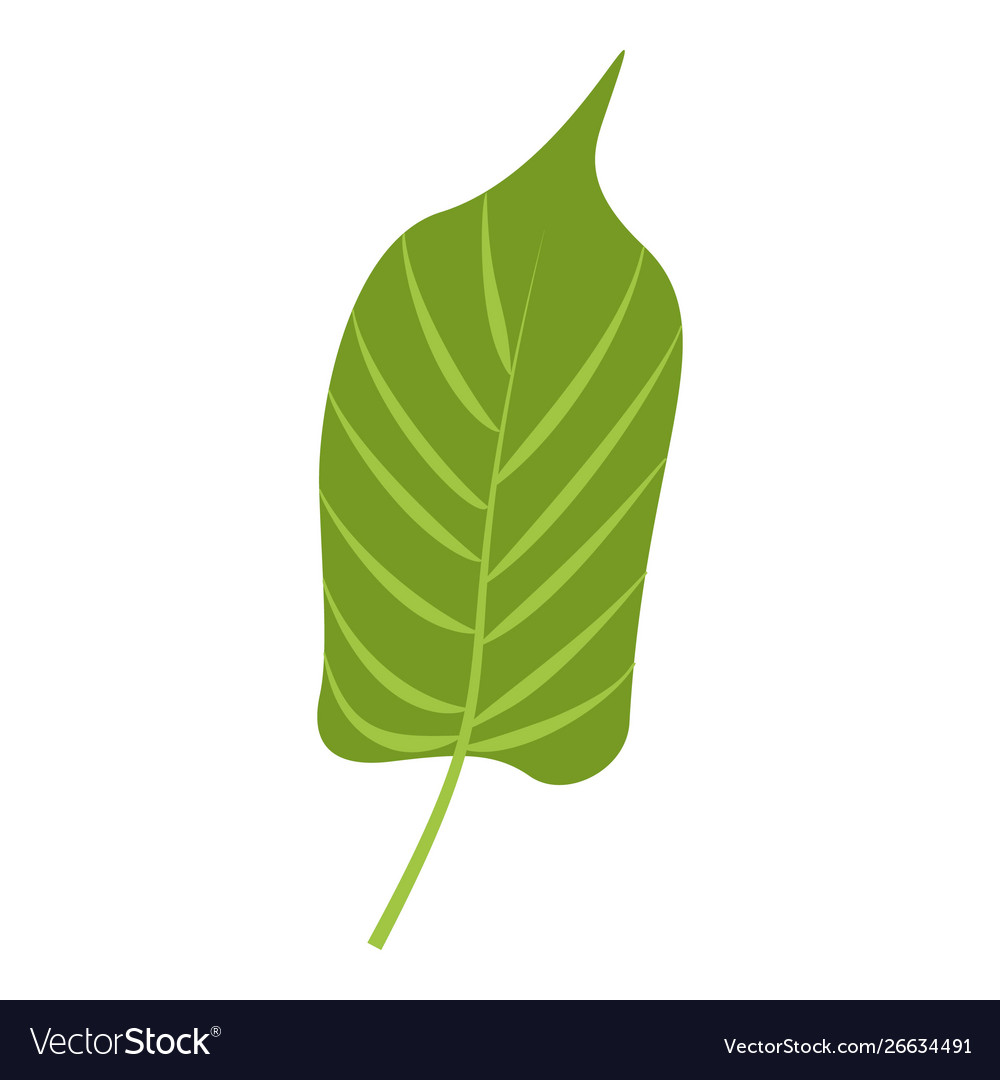 Jungle leaf icon cartoon style