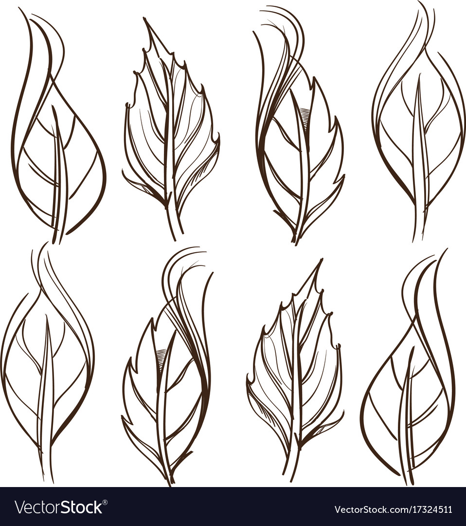 It is a graphic of Terrible Rose Leaf Drawing
