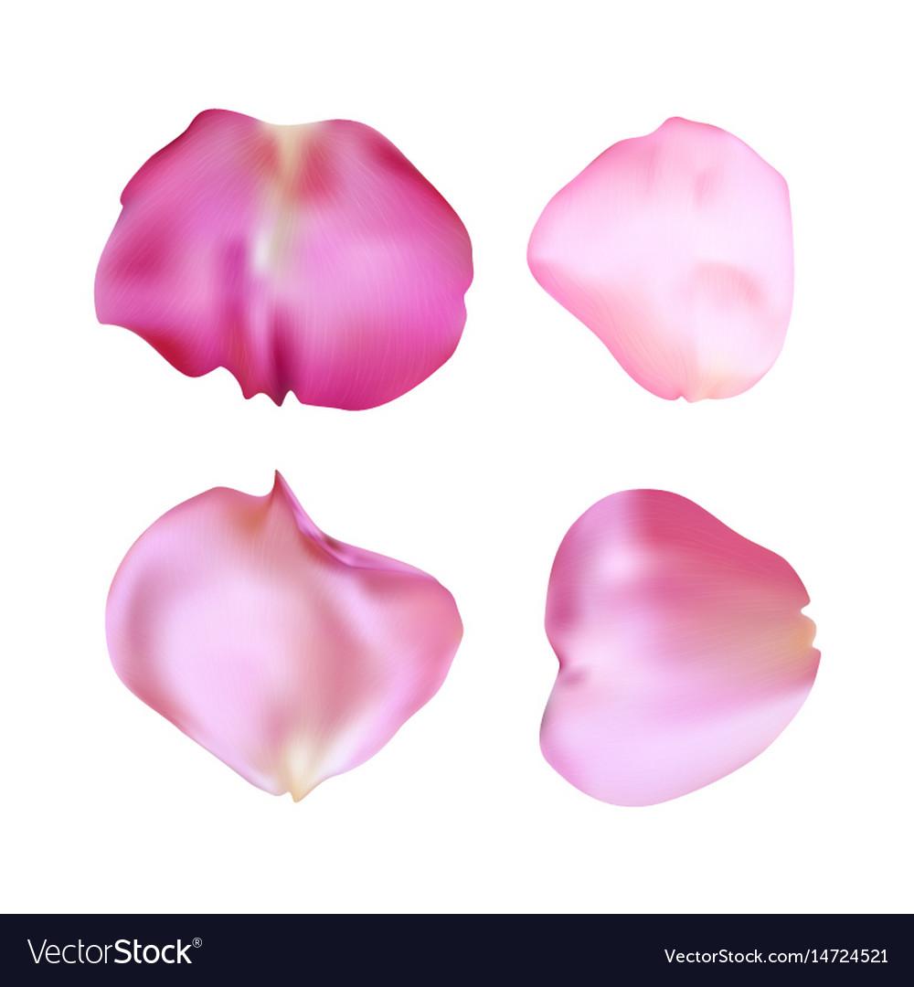 Pink Rose Petals Set Realistic Royalty Free Vector Image