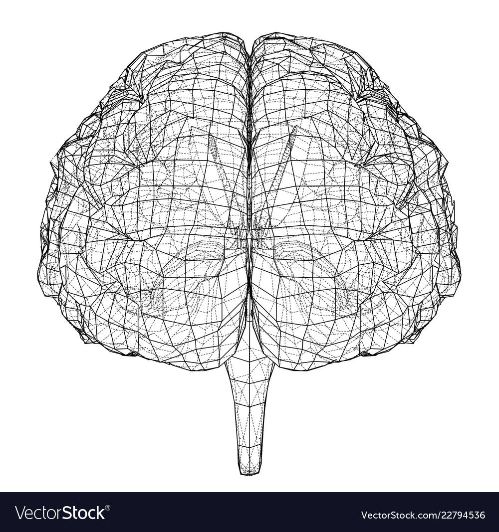 3d outline brain rendering of 3d