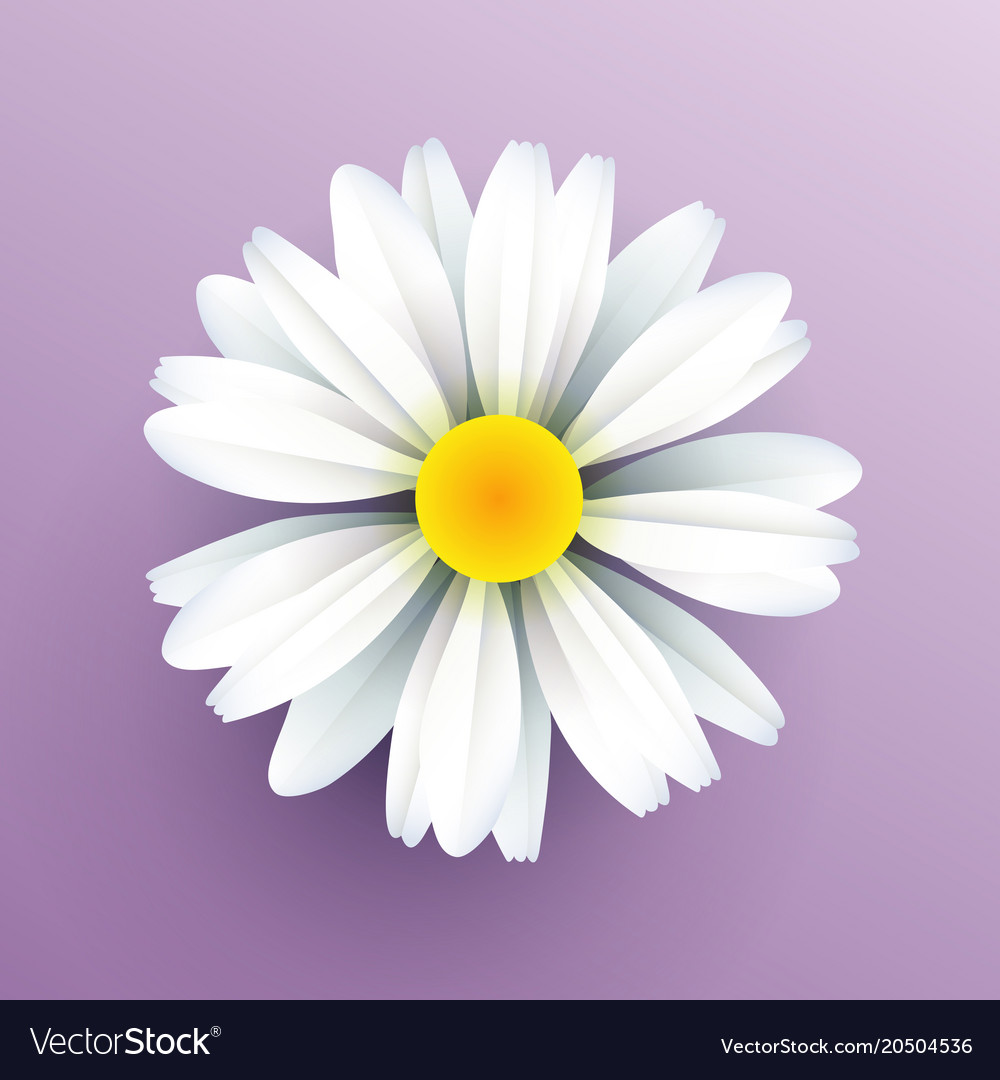 Realistic Paper Daisy Flower Royalty Free Vector Image