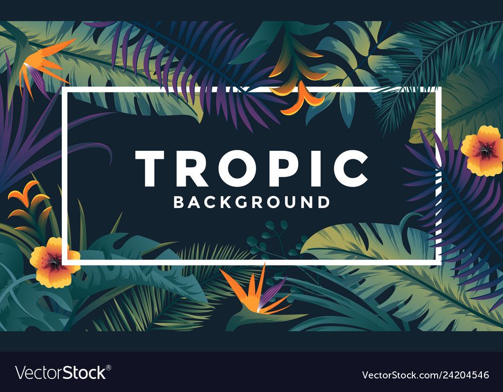 Tropical background with frame 4