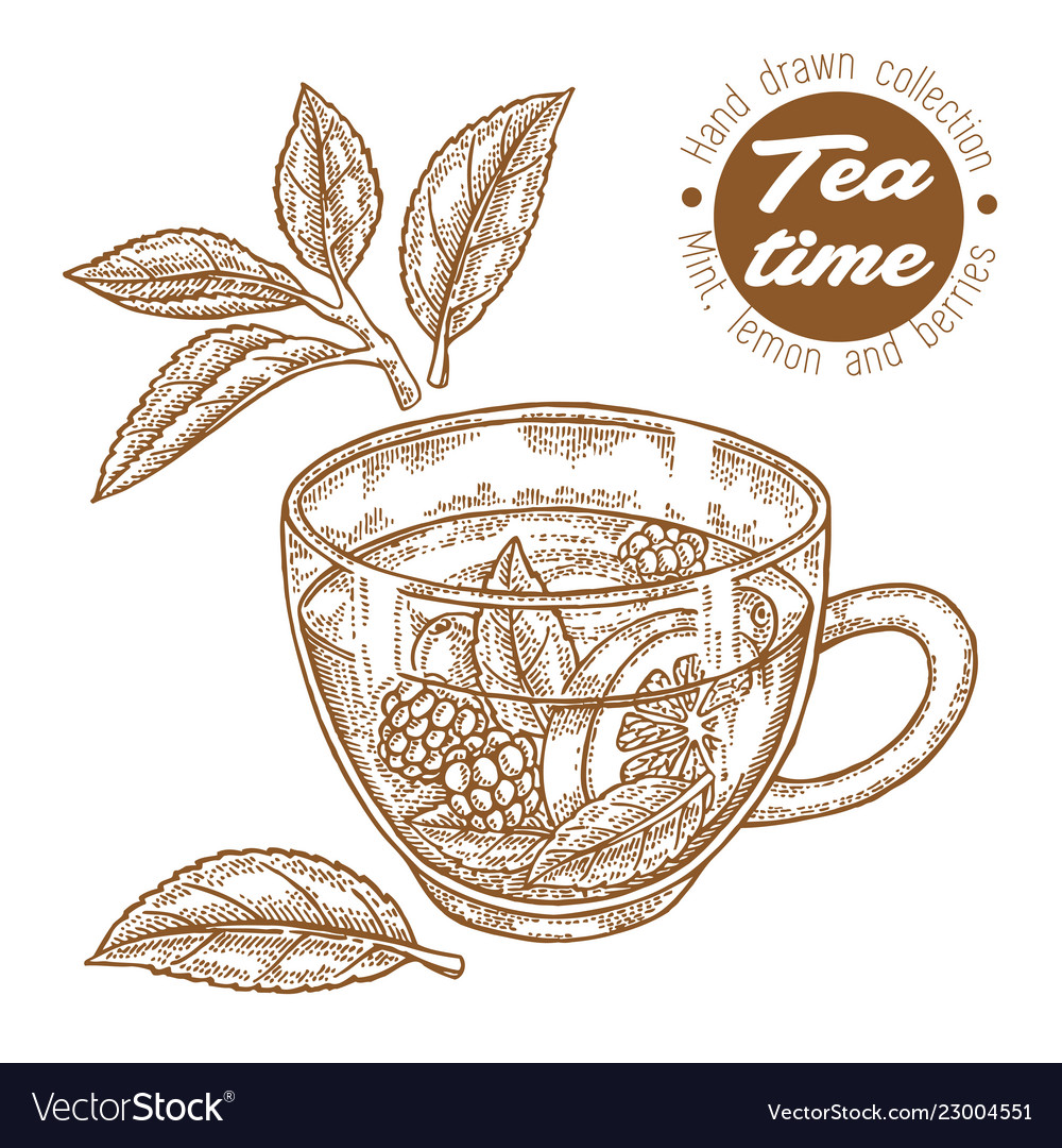 Hand drawn cup of tea herbal tea with lemon mint
