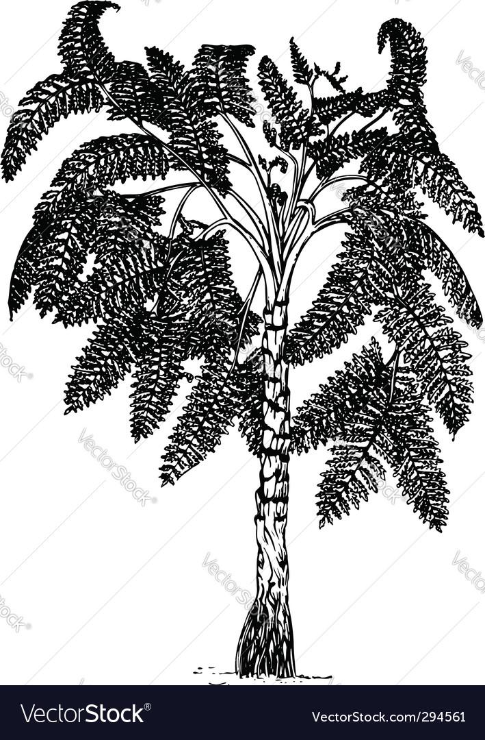 Plant lyginopteridopsida