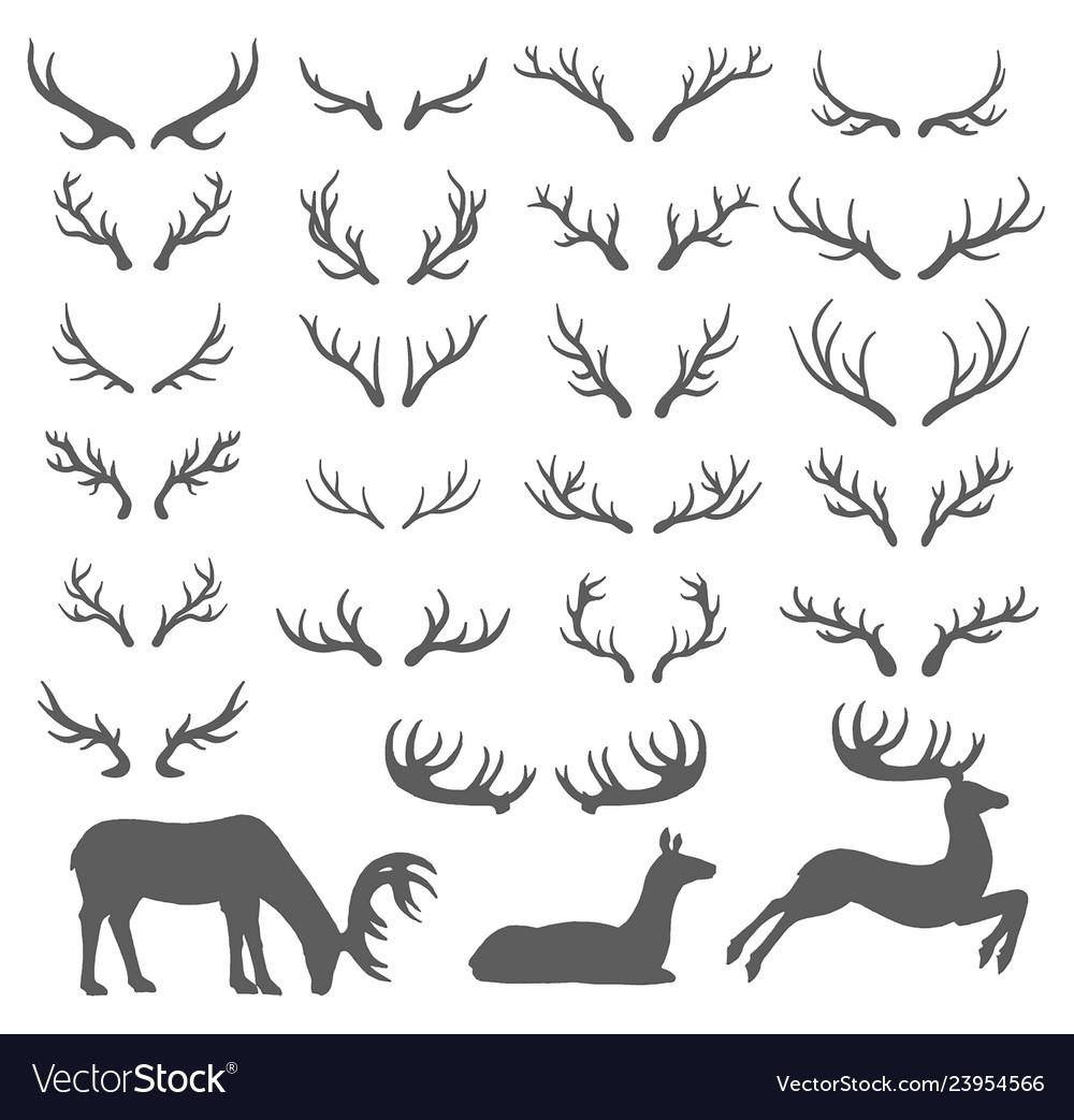 Hand drawn sketch of deer horns