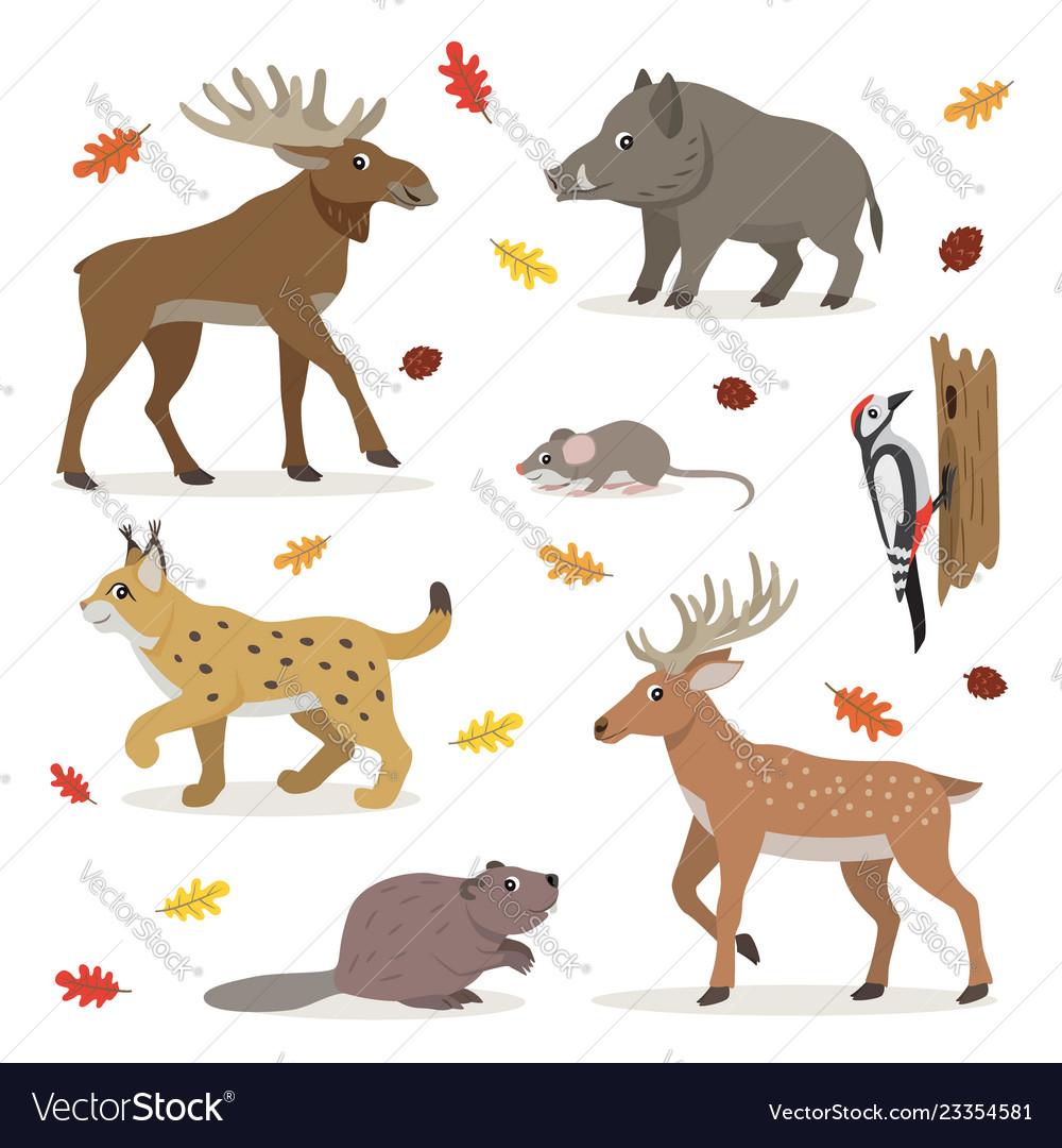 Set forest wild animals isolated on white