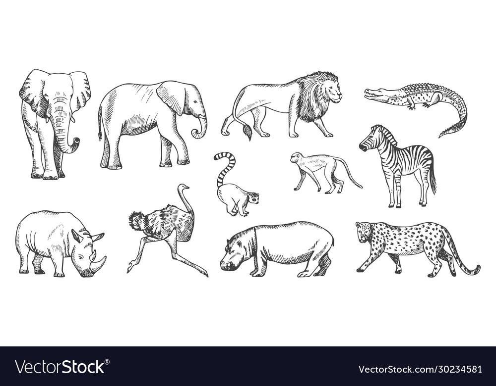 Sketch animal african wild savanna fauna