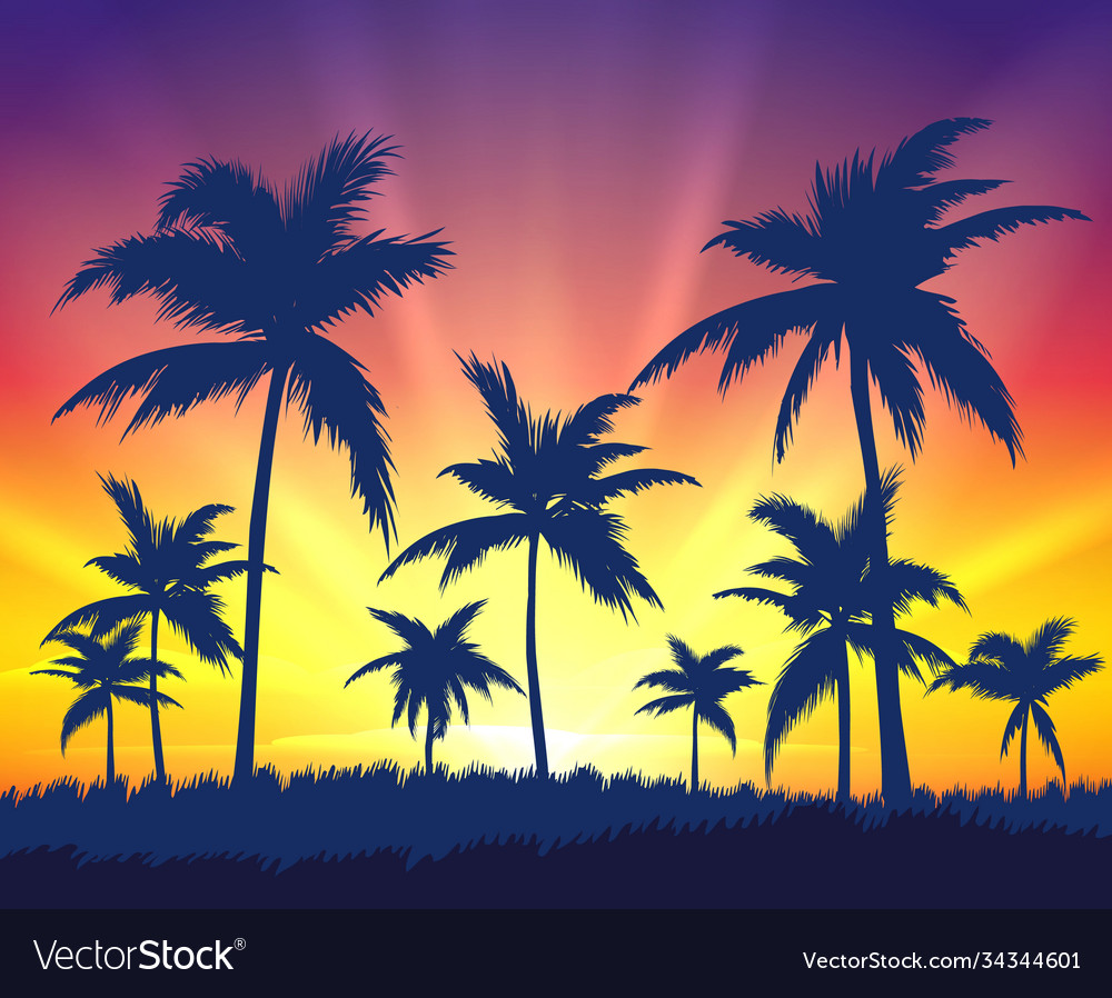 Tropical trees silhouettes on sunset