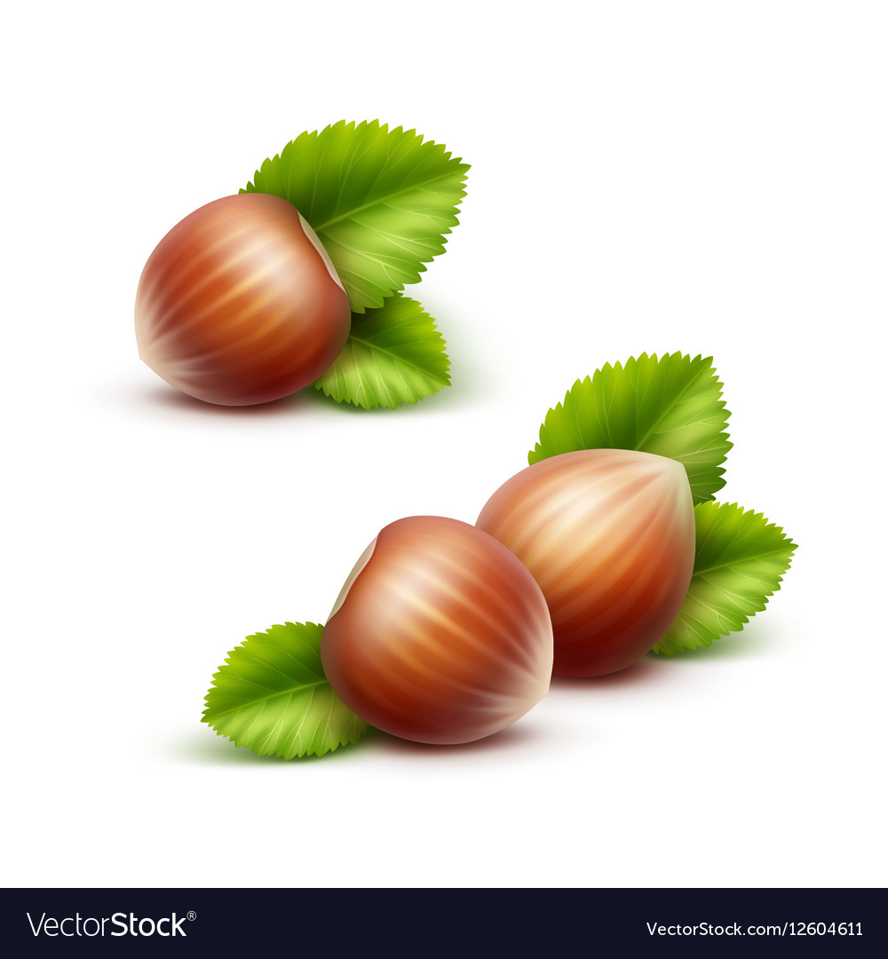 Full Unpeeled Realistic Hazelnuts with Leaves