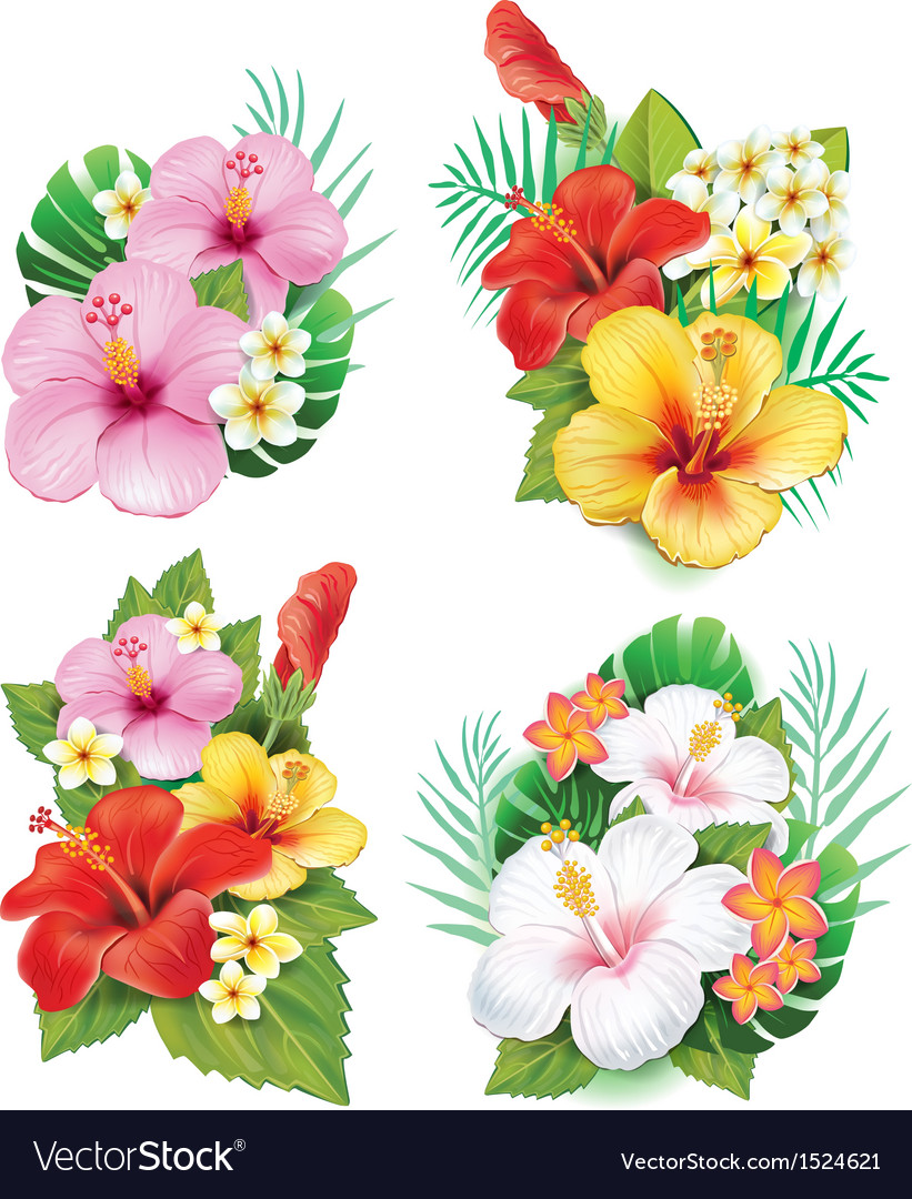 Arrangement from hibiscus flowers royalty free vector image arrangement from hibiscus flowers vector image izmirmasajfo