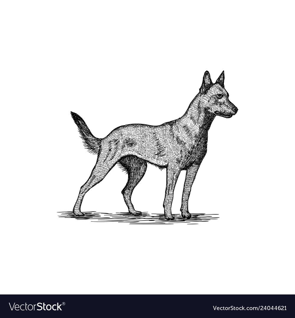 Dog logo design