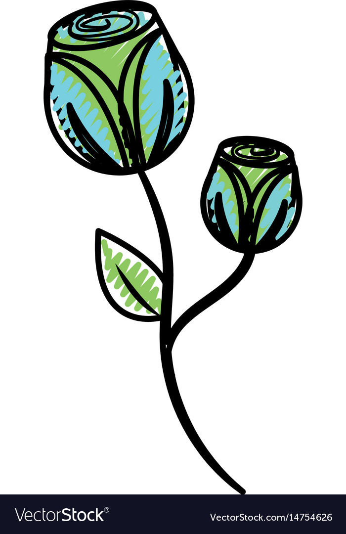 Beautiful flowers with petals botany plant vector image