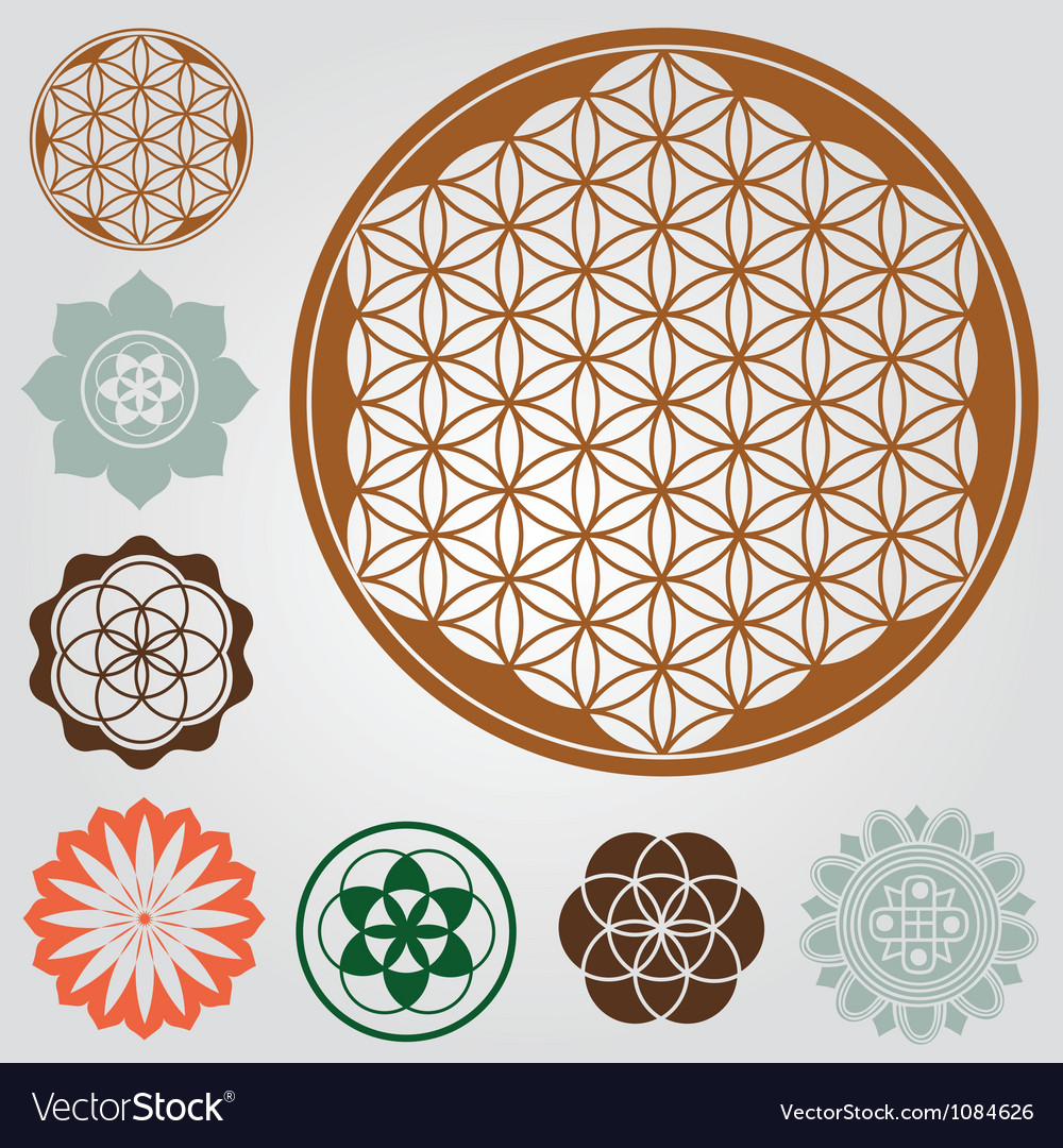 Life seed collection vector image