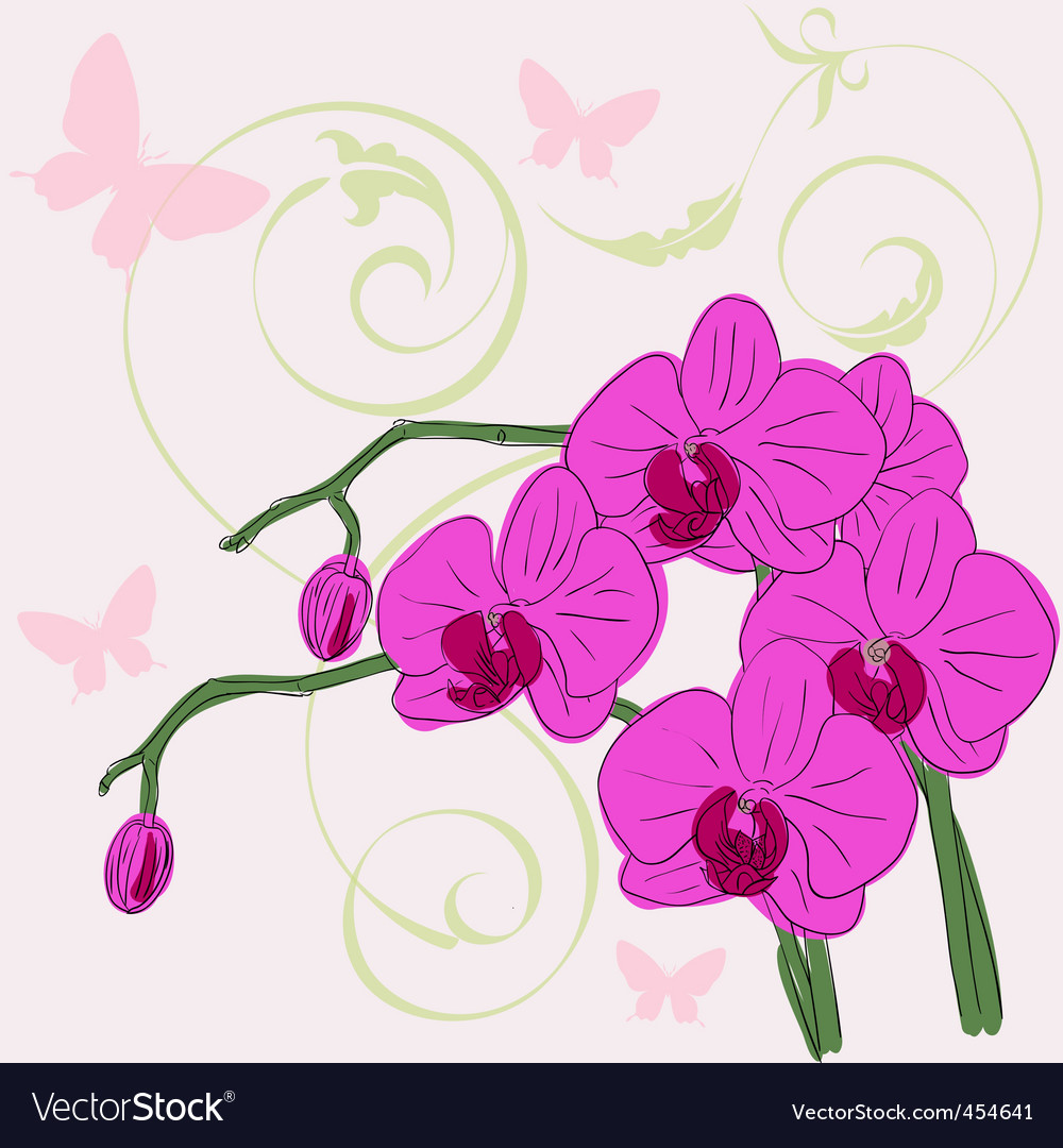 fb9657b89 Twig blossoming orchids Royalty Free Vector Image