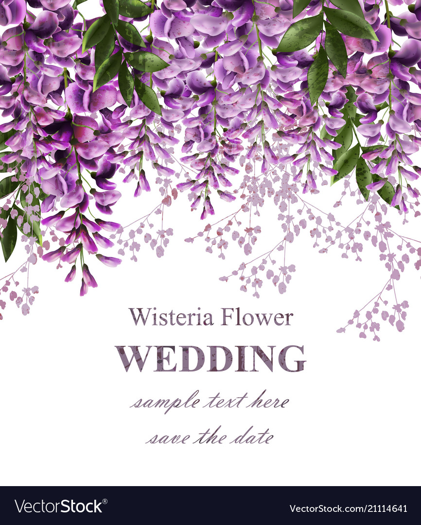 Wedding invitation card with wisteria flowers Vector Image