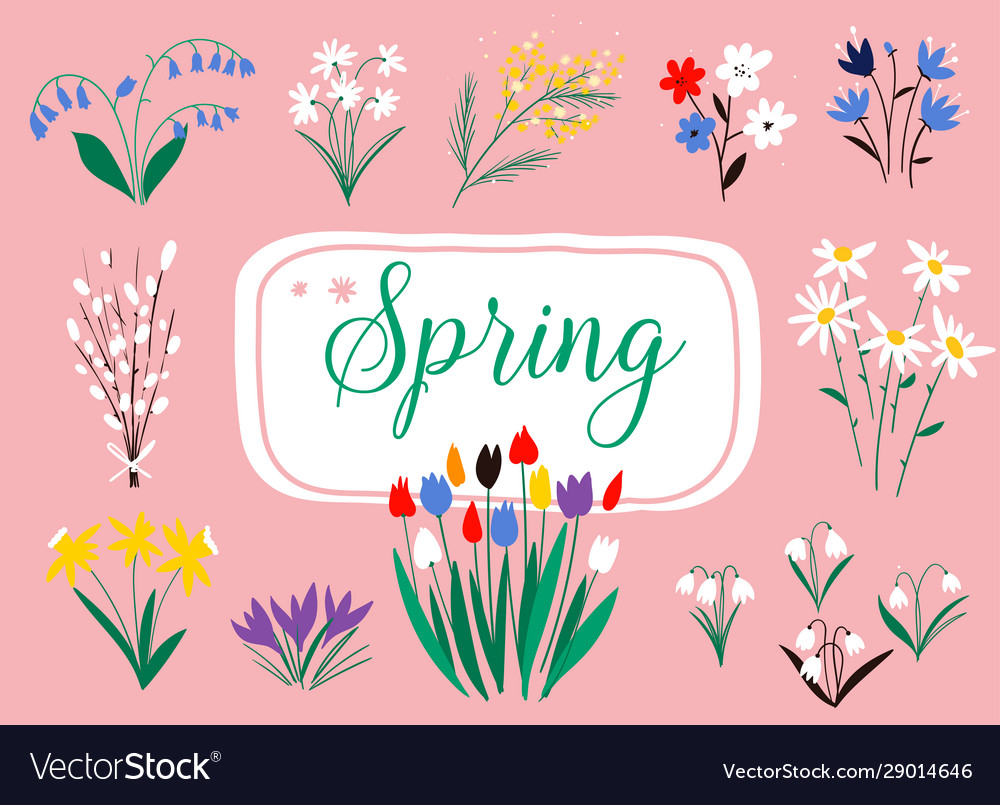 Early spring forest and garden flowers isolated on