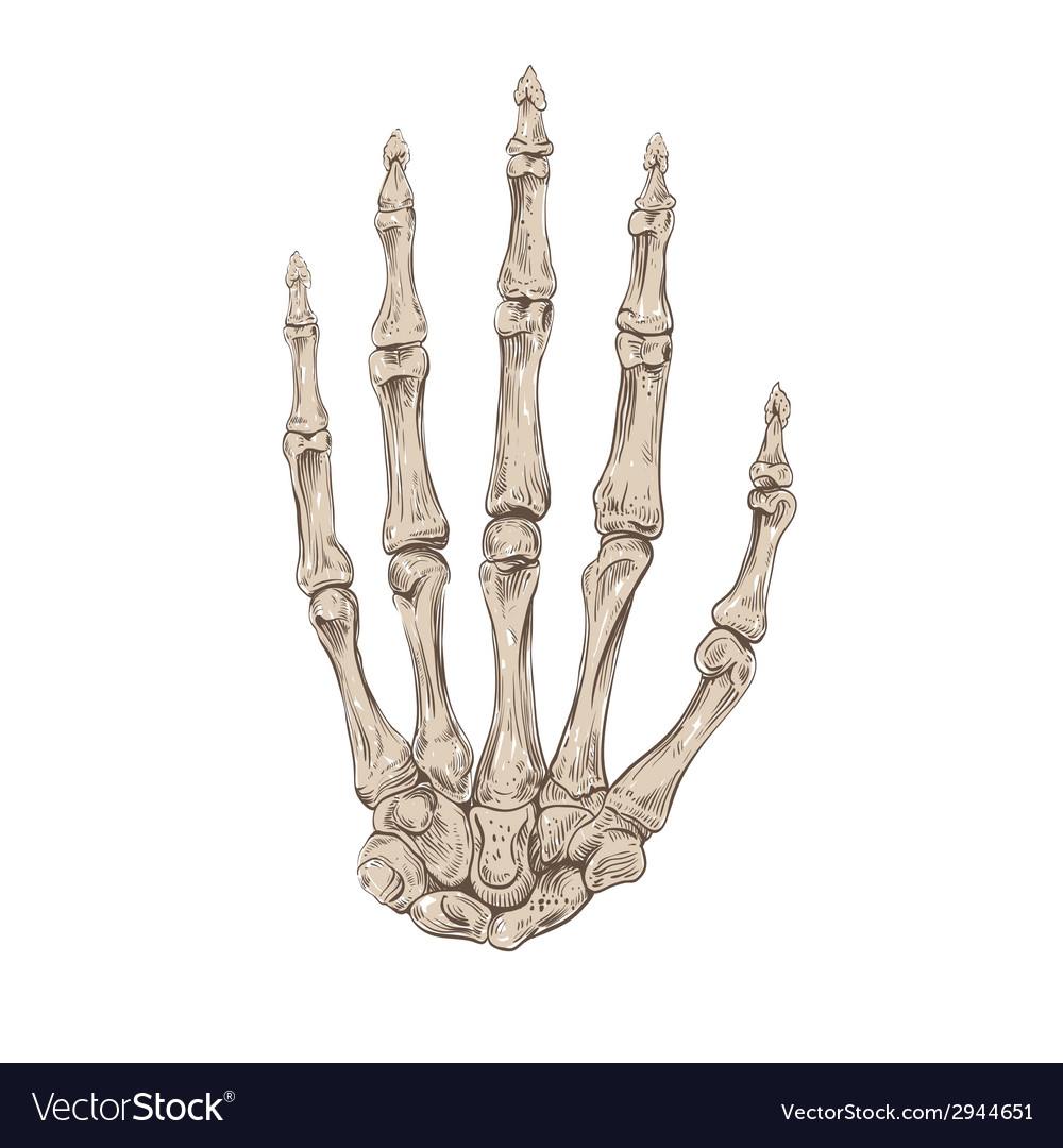 Hand drawing skeleton hand Royalty Free Vector Image