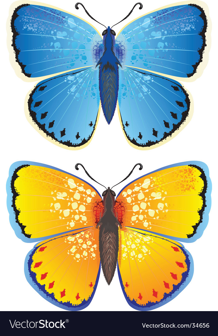 Yellow And Blue Butterfly Royalty Free Vector Image