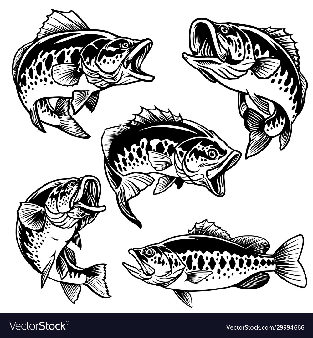 Set black and white largemouth bass fish