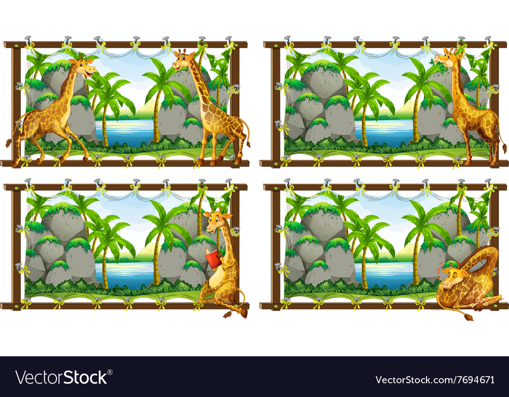 Four scenes of giraffe by the lake vector image
